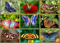 Online jigsaw puzzles macro BigPuzzle.net - free online jigsaw puzzles full screen games! Play free! Bigest online Puzzles with rotation options!