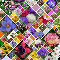 Online jigsaw puzzles photo BigPuzzle.net - free online jigsaw puzzles full screen games! Play free! Bigest online Puzzles with rotation options!