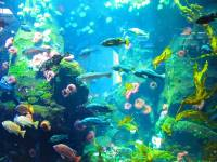 Online jigsaw puzzles underwater BigPuzzle.net - free online jigsaw puzzles full screen games! Play free! Bigest online Puzzles with rotation options!
