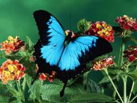 Online jigsaw puzzles insect BigPuzzle.net - free online jigsaw puzzles full screen games! Play free! Bigest online Puzzles with rotation options!