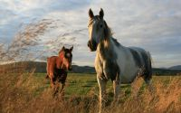 Online jigsaw puzzles animals BigPuzzle.net - free online jigsaw puzzles full screen games! Play free! Bigest online Puzzles with rotation options!